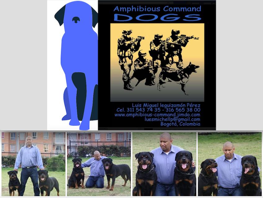 amphibious-command-dogs-banner-wpic