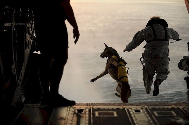 work-dogs_skydiving-865507_640